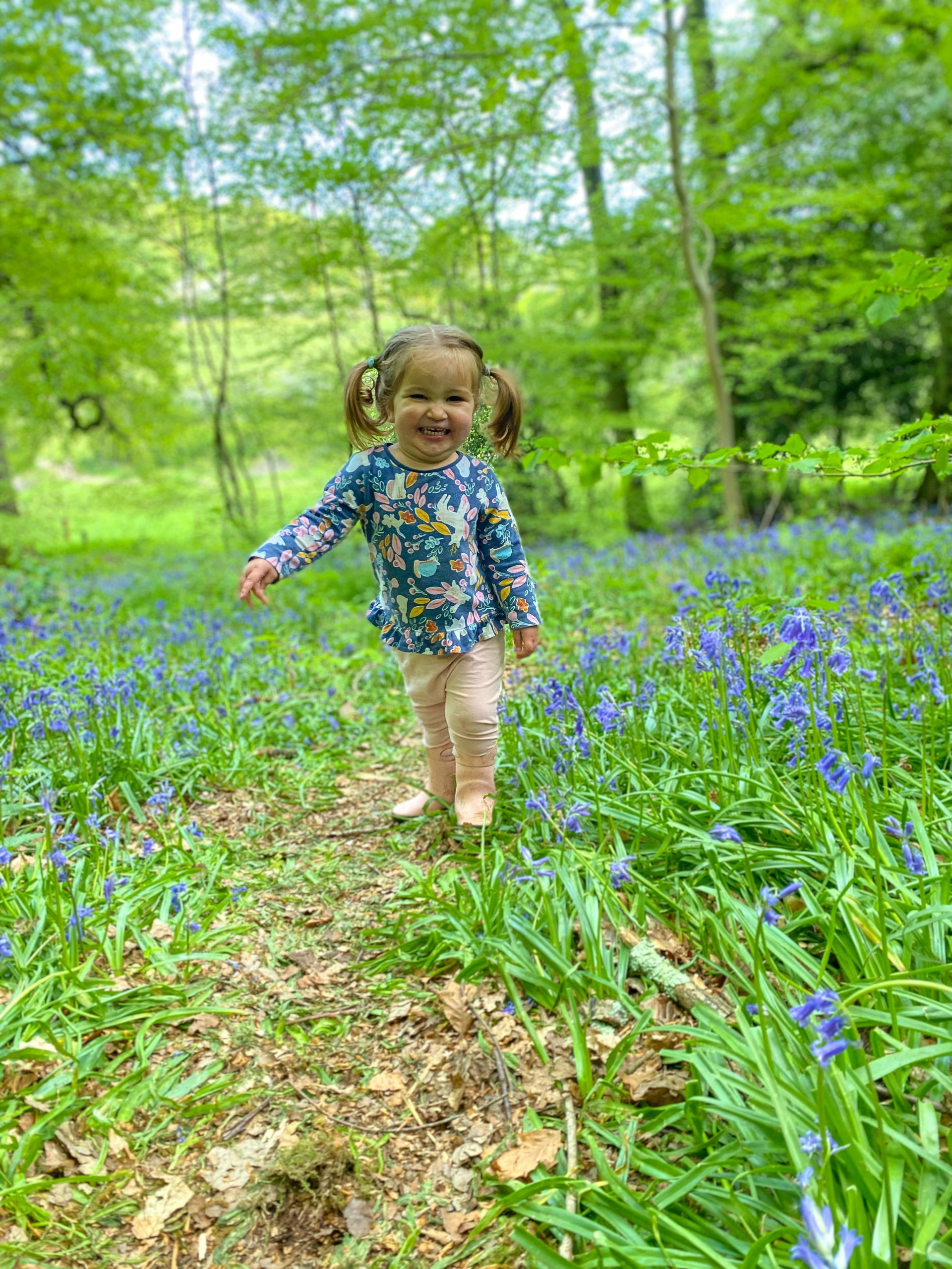 Bluebells in Common Wood