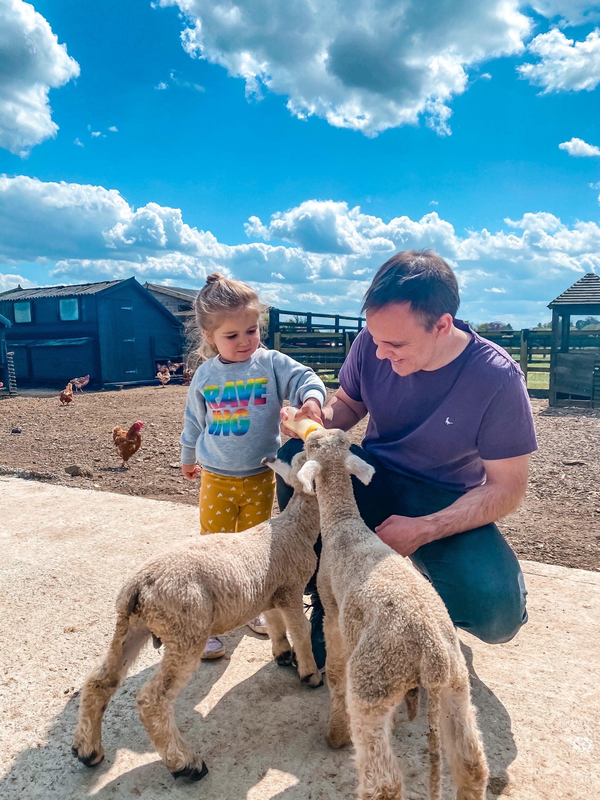 Feeding the lambs at Nathan's Farm