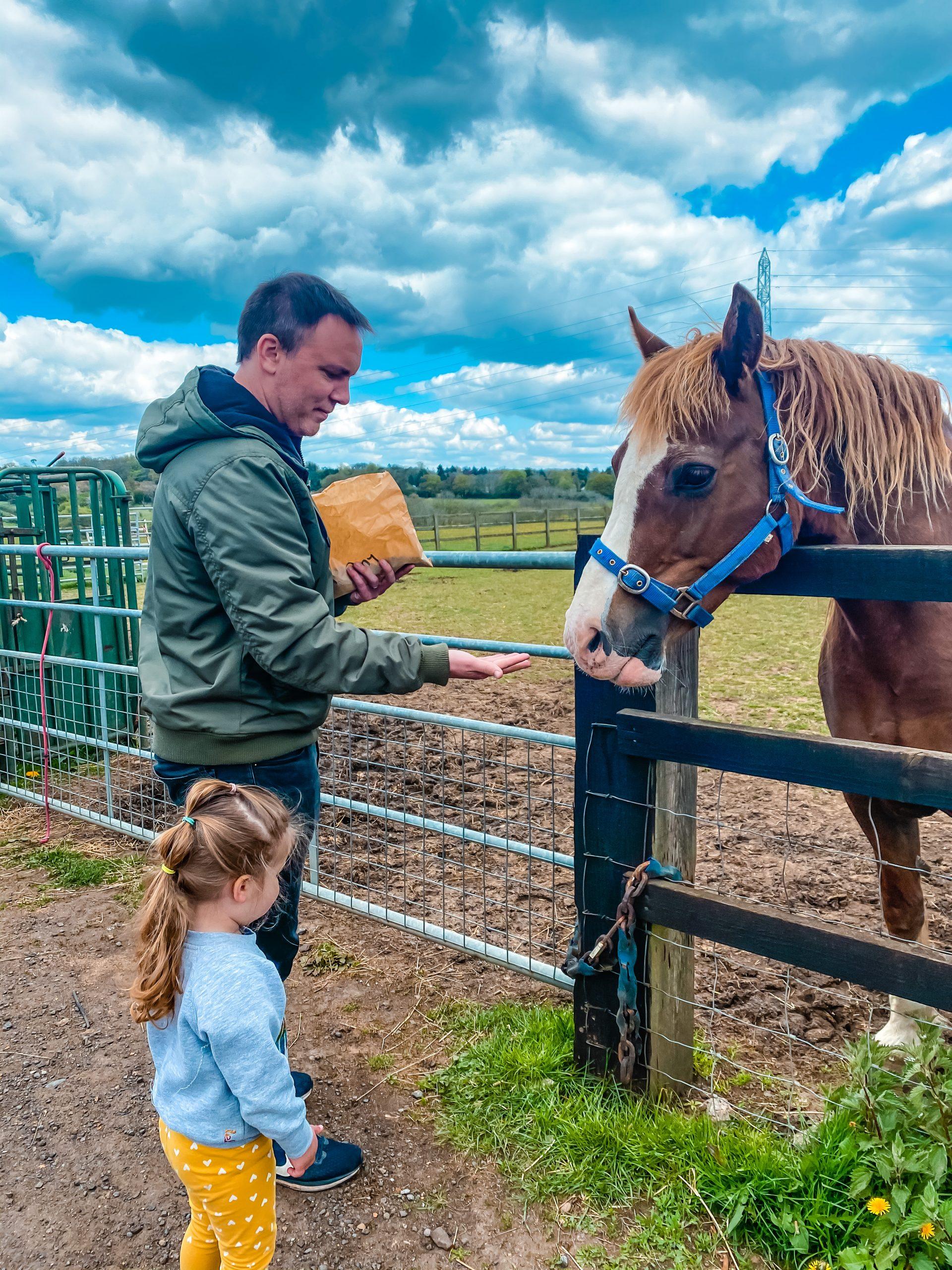 Feeding the horses at Nathan's Farm